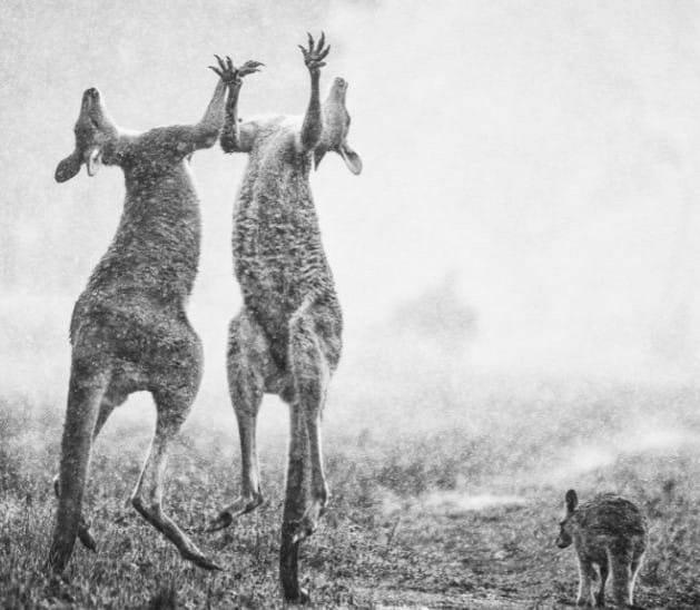 В Австралії радіють дощу: Зворушливі фото та відео