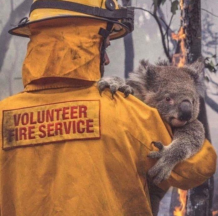 Щонайменше 24 людини загинули в результаті пожеж в Австралії, а також майже півмільярда тварин