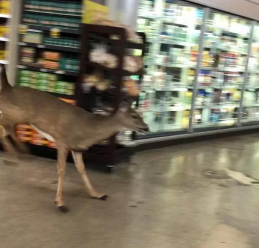 Олень забіг в американський супермаркет і налякав відвідувачів