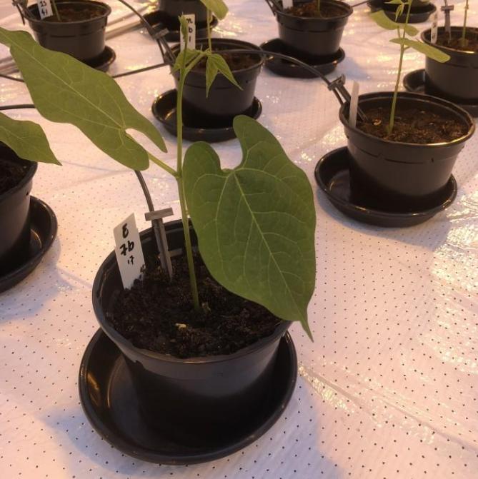 Людську сечу будуть використовувати для вирощування рослин на Марсі